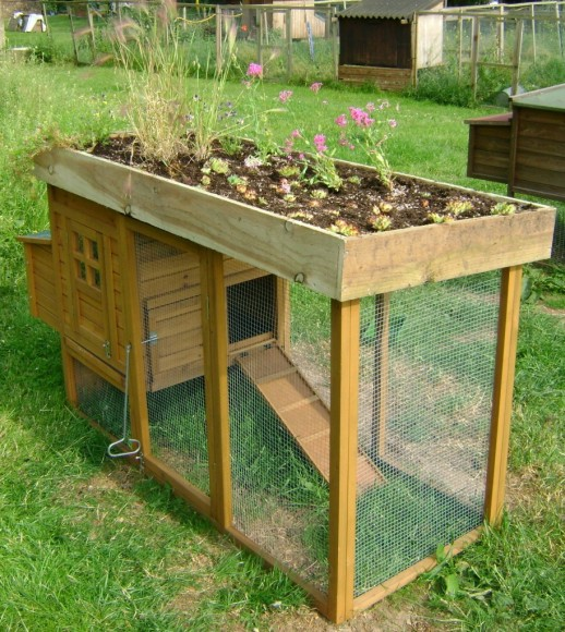 Green-Roof-Chicken-Coop