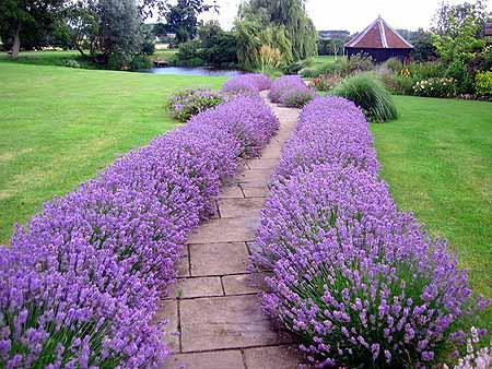 backyard-ideas-garden-path-house-exteriors-feng-shui